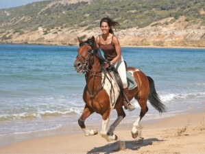 Horse Riding San Francisco Best Image Lobster And